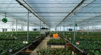 モテギ洋蘭園、台湾にて蘭ランの植物工場を建設。電気代・人件費の削減と世界市場を狙う