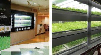 三菱重工業、自社ビル内で太陽光発電による植物工場「店産店消型レストラン」を開設