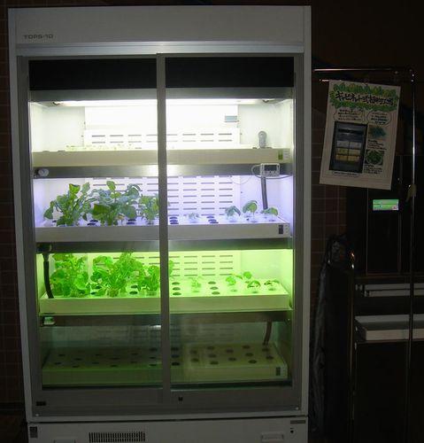 新潟県、補助金公募によるレストラン店舗併設型・植物工場の普及実証へ