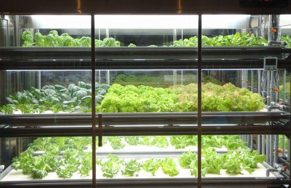 秀和建設、新潟県の補助を活用しながらキャビネット式の植物工場を開発