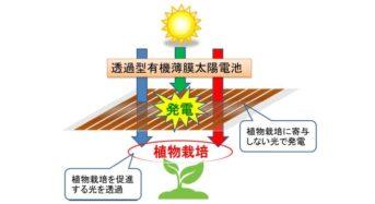 光を通す太陽電池と赤い蛍光シートを融合。野菜の栽培と発電を同時に実現