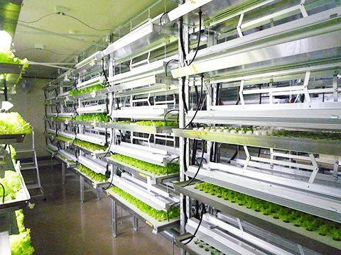 安部製作所、商業プラントとして青森県内初の完全人工光型植物工場をオープン