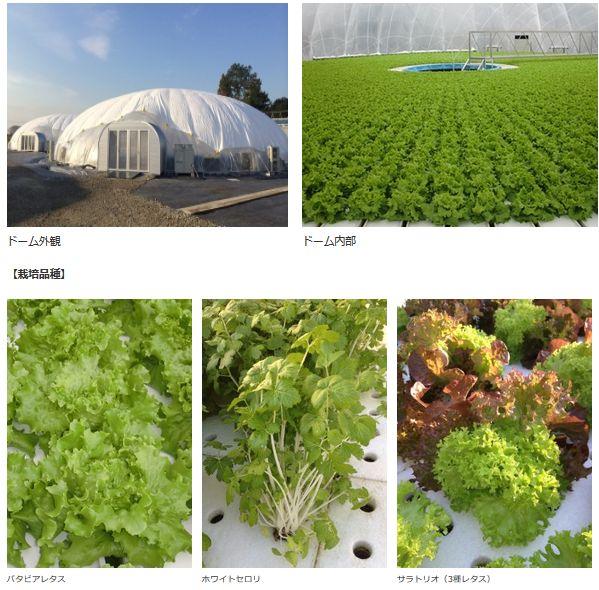 王子HD、グランパ社の太陽光利用・ドーム型の植物工場6棟を稼働