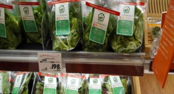 沖縄県・最大級の植物工場が出荷から約3年で撤退。販路確保・安定生産には長期的な視野が必要