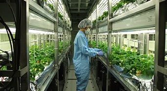 [他社セミナー案内] 植物工場による薬用植物・医薬品原材料の研究開発動向を知るチャンス