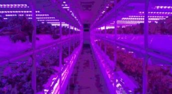 昭和電工の植物工場システムがクアラルンプール「ISETAN The Japan Store」で採用