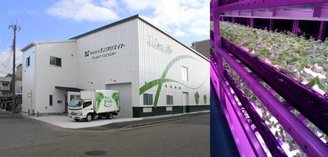神戸製鋼所、高機能抗菌技術ケニファインを農業分野へ応用。新設した植物工場にも導入
