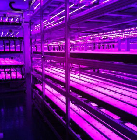 小竹商店グループ、障がい者雇用型のLED植物工場を富山県高岡市にオープン
