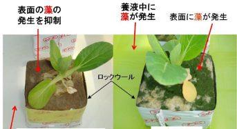 抗菌めっき技術「ケニファイン」水耕栽培における藻・病害の発生を抑制