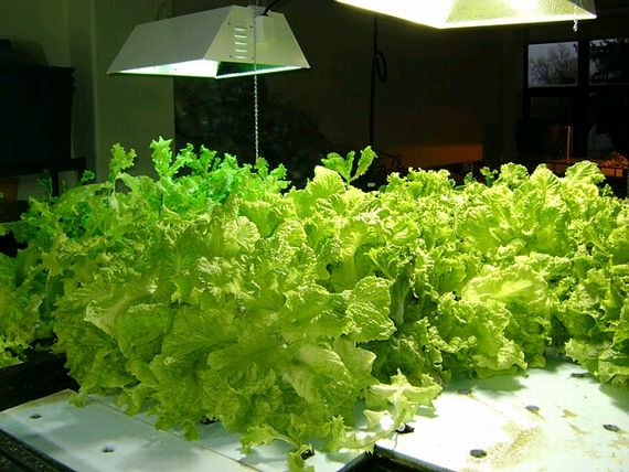 NYにある貧困エリアの学校、学生にドーム型・植物工場にて新鮮野菜を無償提供
