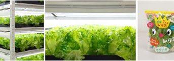 1日1万株の国内最大級の植物工場 「柏の葉スマートシティ」にて本格稼働