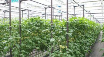 三菱樹脂、トマト栽培向け植物工場プラントの販売強化