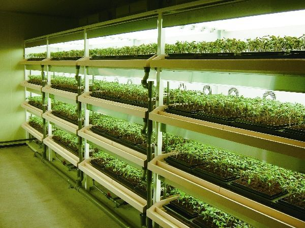 三菱樹脂グループと千葉大、2009年の公募事業にてトマトの植物工場を建設