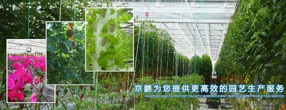 中国ハルビン、総投資額1,600億円の世界最大・植物工場を建設予定。機能性野菜の研究も