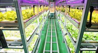韓国にて植物工場の研究開発が加速。日本と異なり84%がリーフレタスとして消費