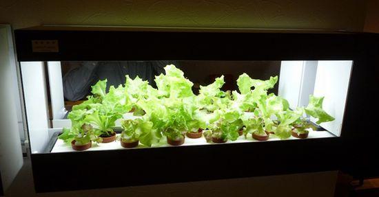 エスキュービズム、韓国の植物工場市場へ参入するため現地子会社を設立