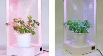 コイト電工、LED光源による小型植物工場キット「グリーンキャンドル」を販売