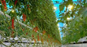 世界の都市開発に期待される環境志向型アグリビルディングや植物工場
