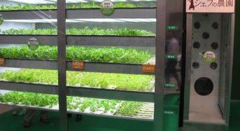 電通ファシリティマネジメント、店舗併設型の植物工場システムを販売開始