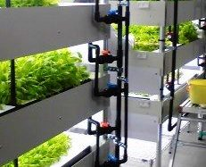 山形包徳、植物工場施設の増産。障がい者雇用型の低カリウム野菜の生産へ