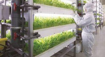 山口大学、MOT総研・三菱化学が植物工場に関する包括的連携協定を締結