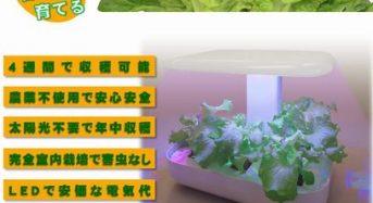 レグルス、イチゴ・トマト植物工場にも最適な高出力LEDを開発