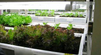 企業不動産の資産は約490兆円。CREマネジメントにも植物工場を活用