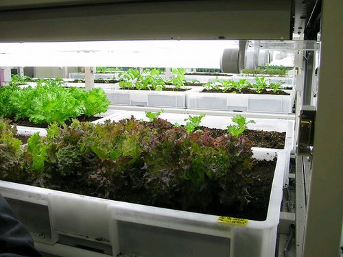 丸紅、人工土壌を利用した植物工場のショールームを開設