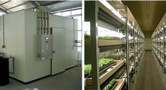 三菱樹脂、完全人工光型植物工場にて薬用植物・甘草(かんぞう)の栽培研究をスタート