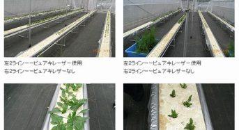 東洋バルヴ、完全循環式の養液栽培にて太陽光発電を導入