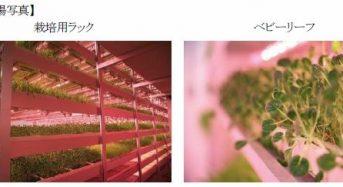 三菱化学、LED型・植物工場システムをロシア企業へ納入