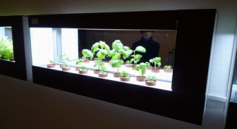 低価格・植物工場ユニット『箱庭栽培』が、東京渋谷のSamurai Cafe渋谷道玄坂店に納入