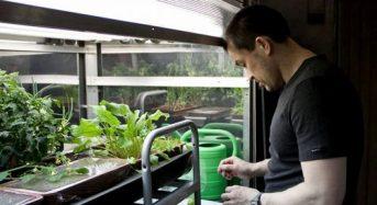 ロシア、小型の植物工場「サラダ・マシーン」を開発。スペースシャトル内への設置を目指す