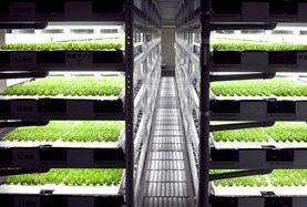 植物工場のスプレッドが米国研究機関と連携、乾燥地帯における新たな農業生産の研究へ