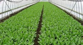 コンビニ向け弁当製造の「わらべや日洋」太陽光利用型植物工場による高品質ホウレン草を生産へ