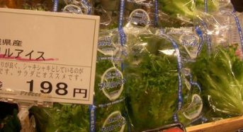 大規模量産化による植物工場野菜の低価格化