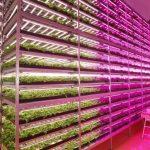 みらいと日本GE「みやぎ復興パーク」内の植物工場にて、環境制御の最適化・LED照明の実証実験を開始