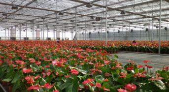 住友化学、中国大連にて高機能農業用ハウスフィルムの製造設備を増強