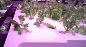 大阪府立大学、優良苗の自動選別ロボットを導入した新世代植物工場が稼働