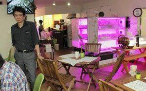 障害者就労支援型の店舗併設型植物工場「グリーンカフェ」がオープン