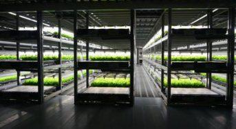 スプレッドが安川電機と提携、世界初の完全自動化した植物工場システムの開発へ