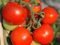 カゴメが中国にて新会社を設立、業務用トマト調味料事業に参入