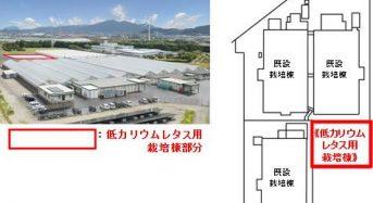 エスジーグリーンハウス、植物工場による低カリウムレタスの生産へ