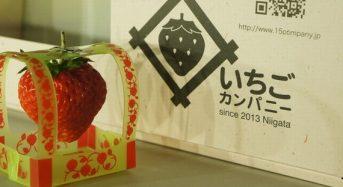 いちごカンパニー、人工光型植物工場によるイチゴ商品の販売へ