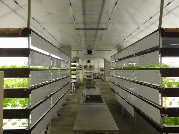 成電工業の植物工場、東京メトロや社会福祉法人へ納入拡大