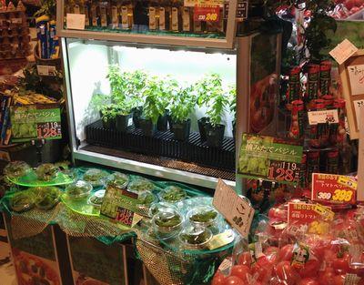アグリサーチ、都市近接の低コスト型植物工場にてフレッシュハーブの生産へ