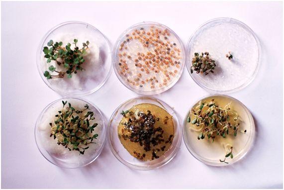 3Dプリンターで造る未来の食べ物「Edible Growth」