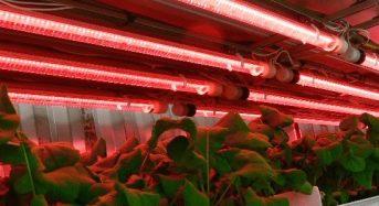 検査用LEDメーカーのシーシーエスが植物工場事業へ新規参入