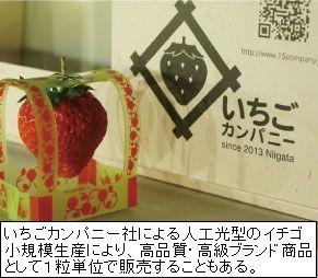 植物工場によるイチゴの採算性