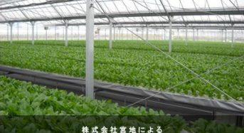 三菱樹脂、障がい者雇用型の植物工場を自社敷地内に建設